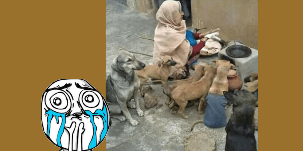 Woman Cooking food for Dogs - Viral Pics of Helping People