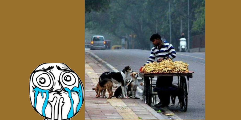 Street Vendor Feeding Dogs - Viral Pics of Helping People
